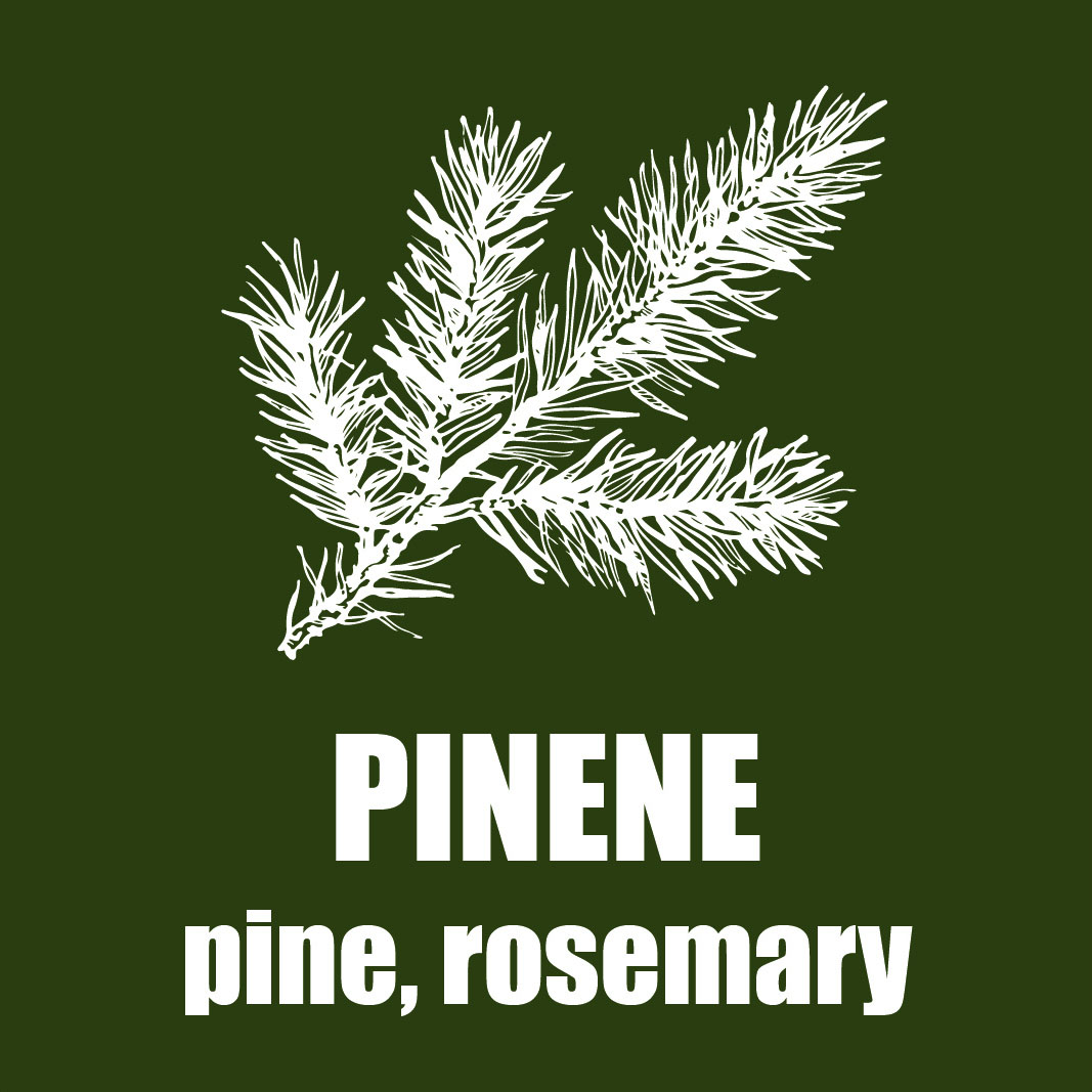 A green graphic picturing a sketch of a pine branch; the text reads,