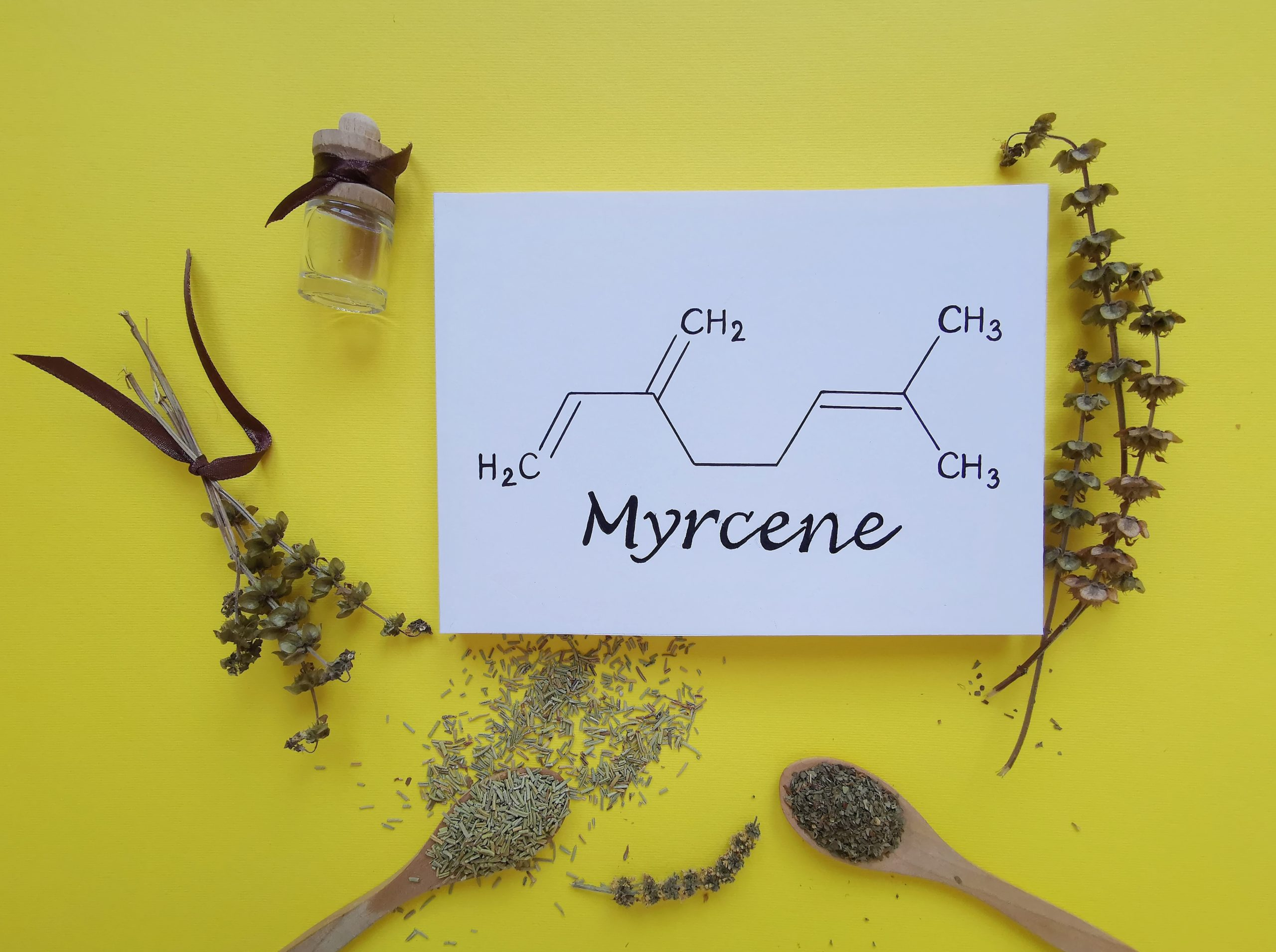 Structural chemical formula of myrcene molecule with dried herb bouquet, basil and rosemary. Myrcene is a monoterpene, an anti-inflammatory, anabolic agent, a fragrance and oil component.