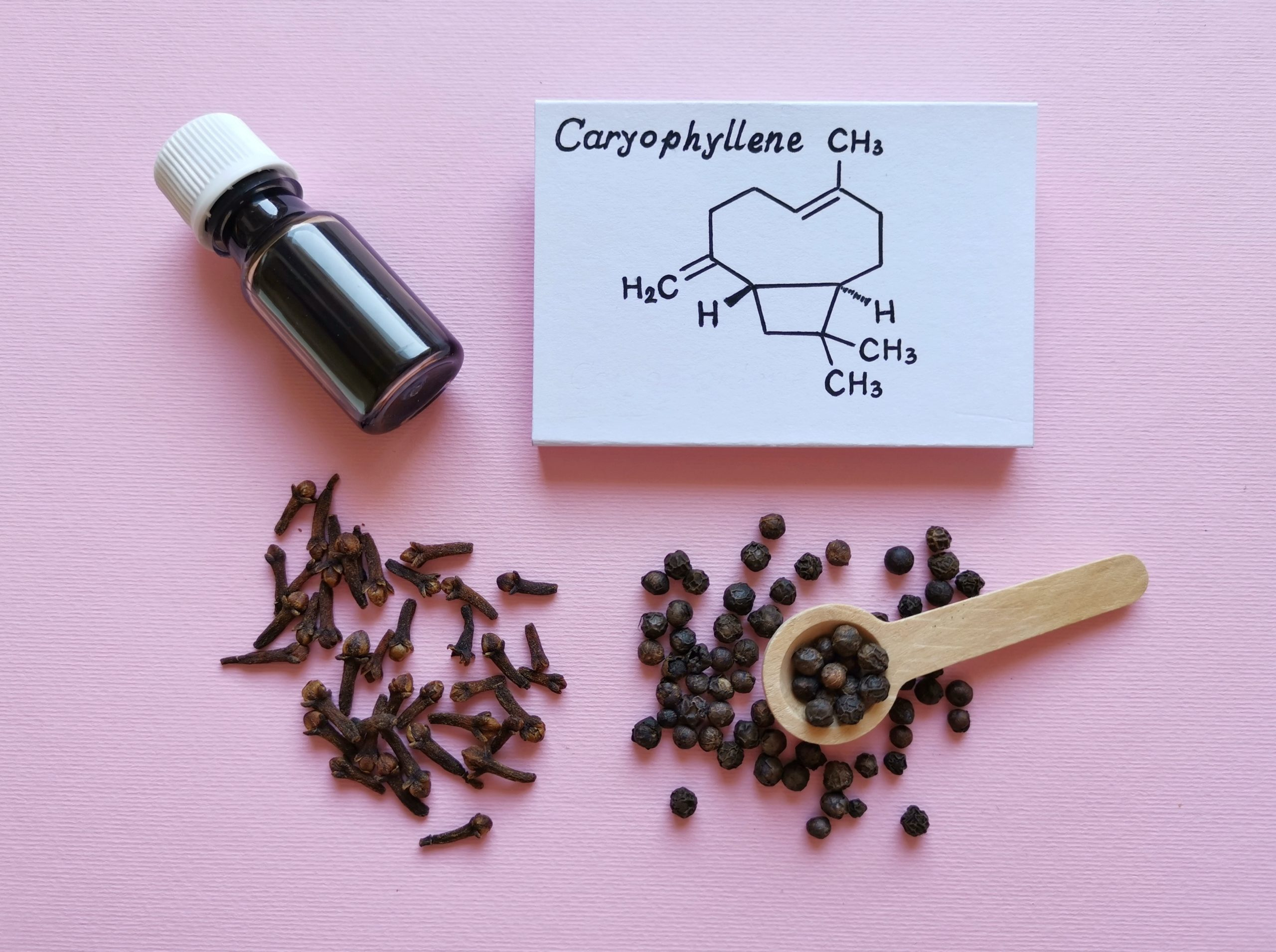 What are the best terpenes? This common question is asked by many cannabis consumers. Caryophyllene, a common terpene, is pictured with cloves and essential oils