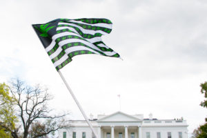 A marijuana flag waving outside of the white house, advocating for federal cannabis legalization.